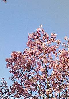 20090328空と花①
