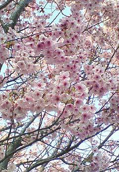 20090328空と花③