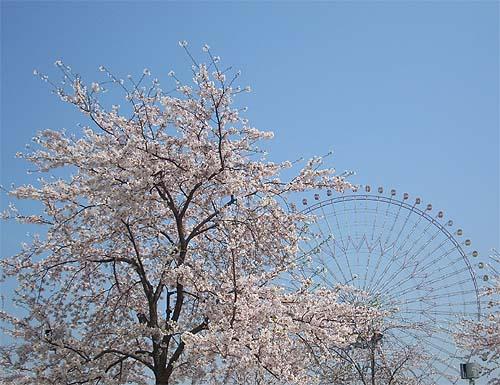 20090406桜②