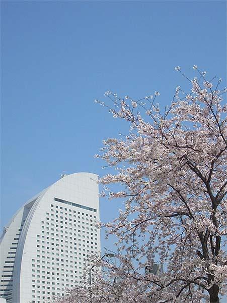 20090406桜③