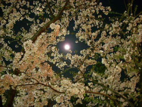 20090406桜と月