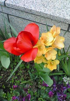 20090404花