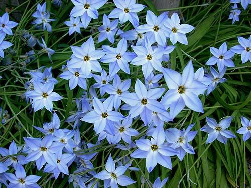 20090414花