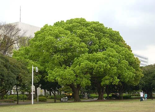 20090420山下公園①