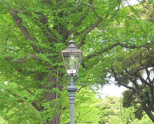 20090420街灯たち④