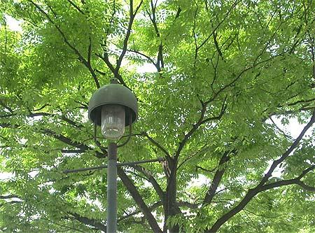 20090510緑と街灯