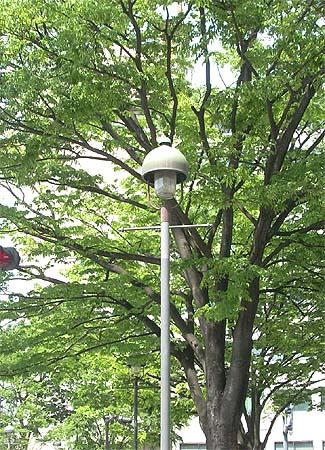 20090510緑と街灯②