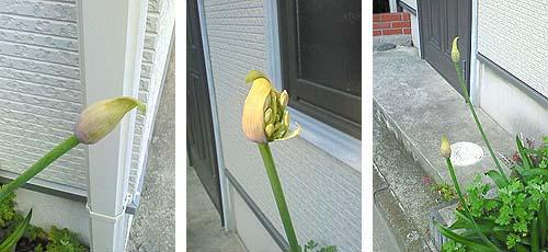 20090607花