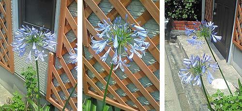 20090619花