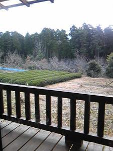 「茶畑」山荘 紗羅樹(湯布院)