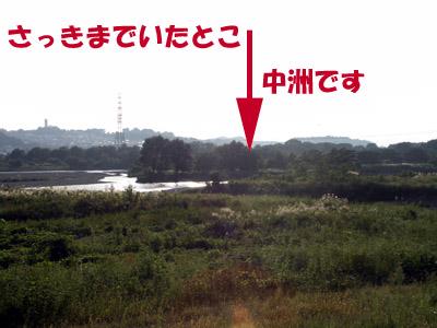 81004c_15.jpg