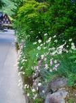 石垣にも、お花が・・