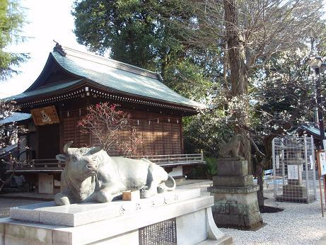 布多天神社の梅1