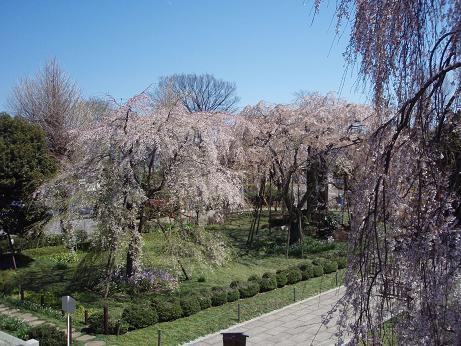 東郷寺山門から見下ろして