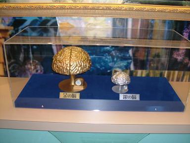 金の脳と銀の脳