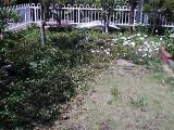my-home-garden1.jpg