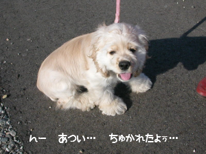 20060309_4.png