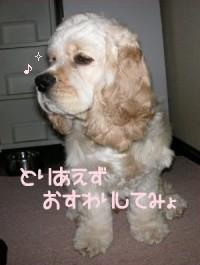 20060420_005.jpg