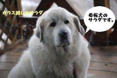 DSC_0009_20101231164816.jpg