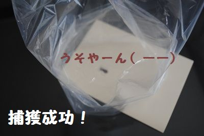 DSC_0068_20110629141940.jpg