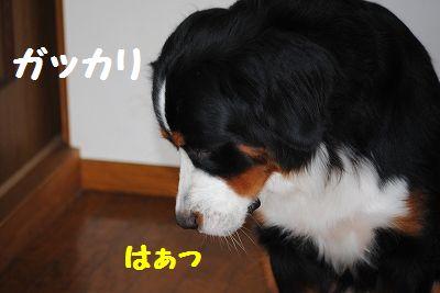 DSC_0167_20110530122851.jpg