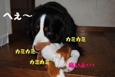 DSC_0320_20110805090442.jpg