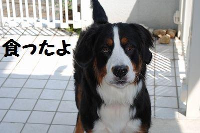 DSC_0455_20100827131834.jpg