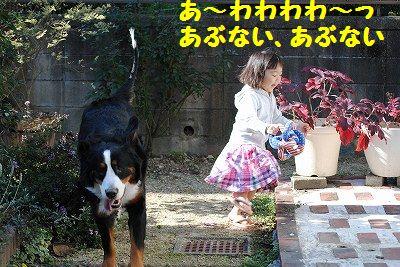 DSC_0475_20101203131141.jpg