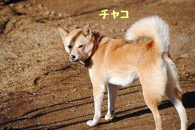 DSC_0696_20101212182006.jpg