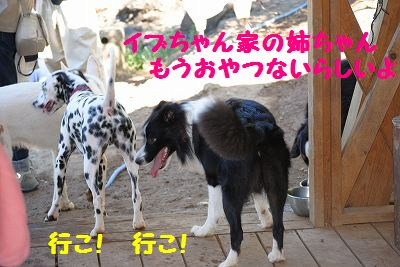 DSC_0760_20101012075714.jpg