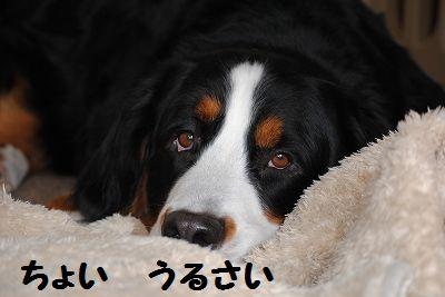 DSC_0987_20101220134142.jpg