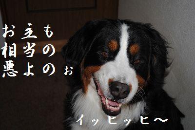 DSC_1496_20110629204705.jpg