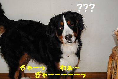 DSC_1602.jpg