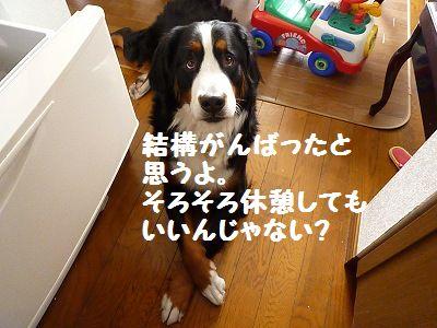 P1170514_20101208123228.jpg