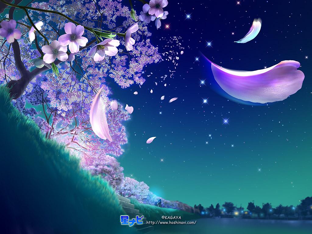 星桜(はな)  0104_1024