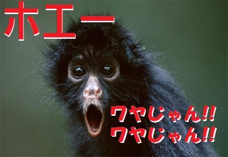 black-spider-monkey.jpg