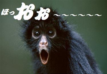 black-spider-monkey_20100531024222.jpg