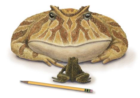 giant-frog-3453611-ga.jpg