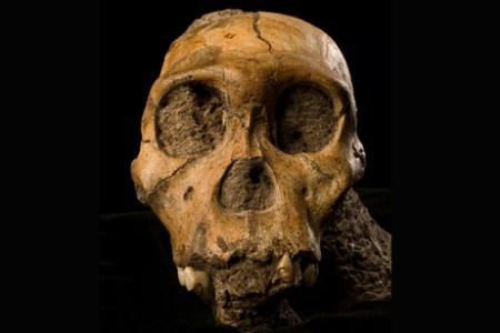 maustralopithecus-sediba-skull-front-view_18457_big.jpg