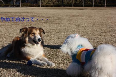 036_convert_20090115.jpg