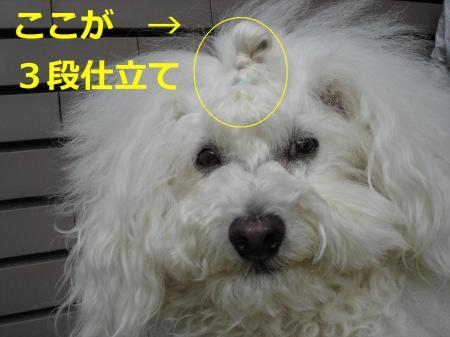 DSC03105繝悶Ο繧ー_convert_20090422134134