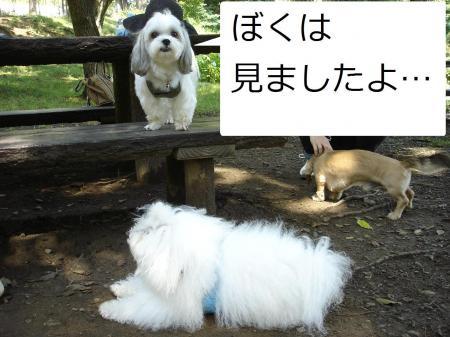 DSC05868繝悶Ο繧ー_convert_20090629141148