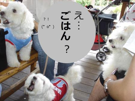 DSC06530繝悶Ο繧ー_convert_20090721105532