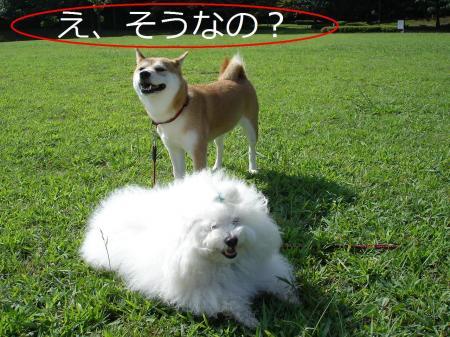 126繝悶Ο繧ー_convert_20090818212519