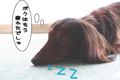 おやすみ えまりん・・・