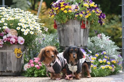 沢山のお花に囲まれて・・・
