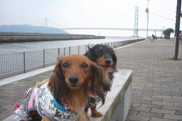 明石海峡大橋をバックに・・・