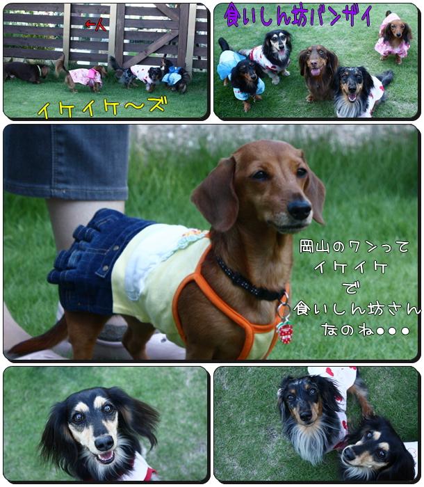 これが岡山県犬!