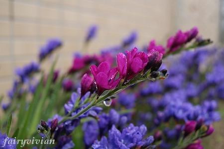 flower090427 1
