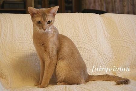 fairy122001.jpg